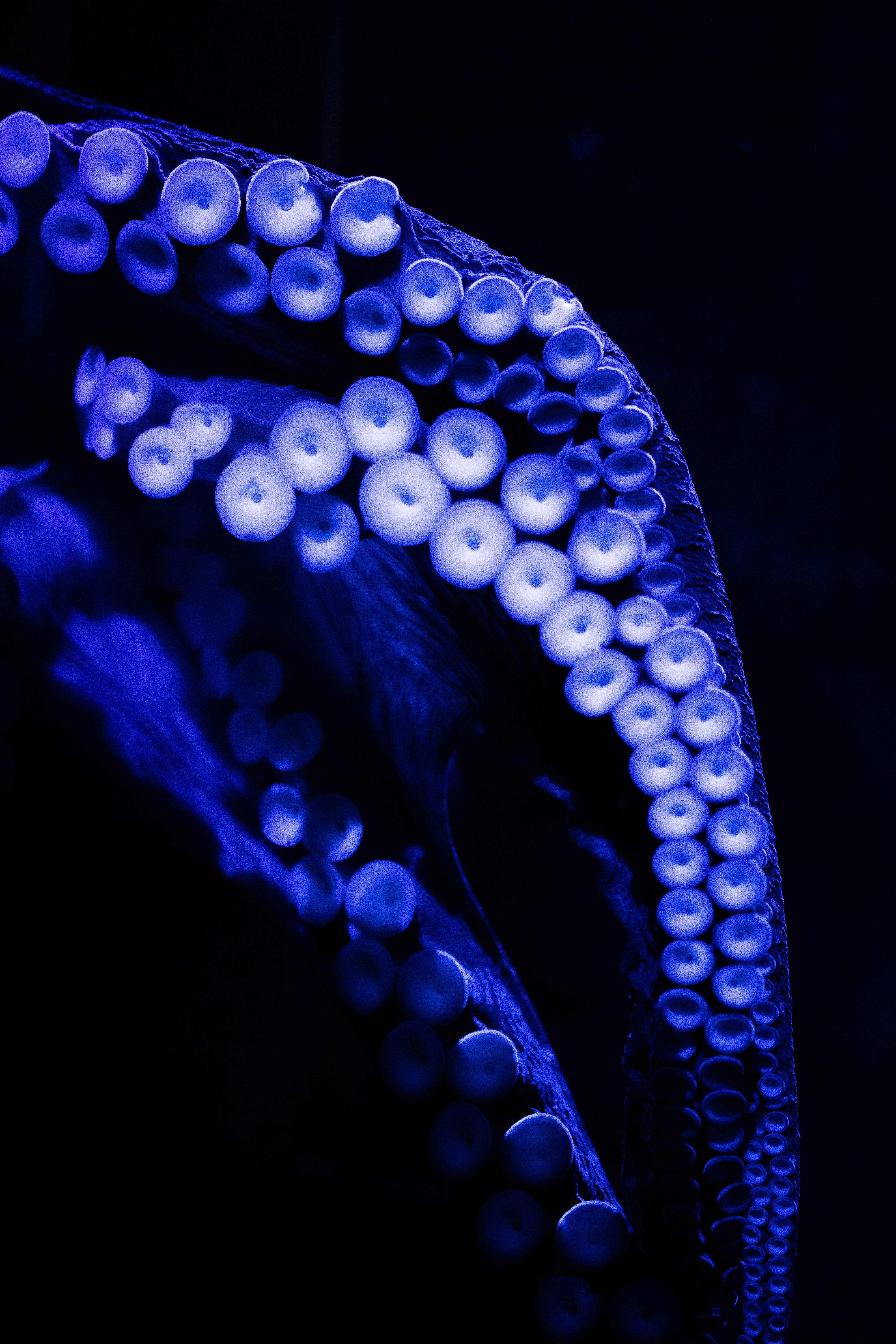 69282 download wallpaper Macro, Octopus, Tentacles, Close-Up, Dark screensavers and pictures for free