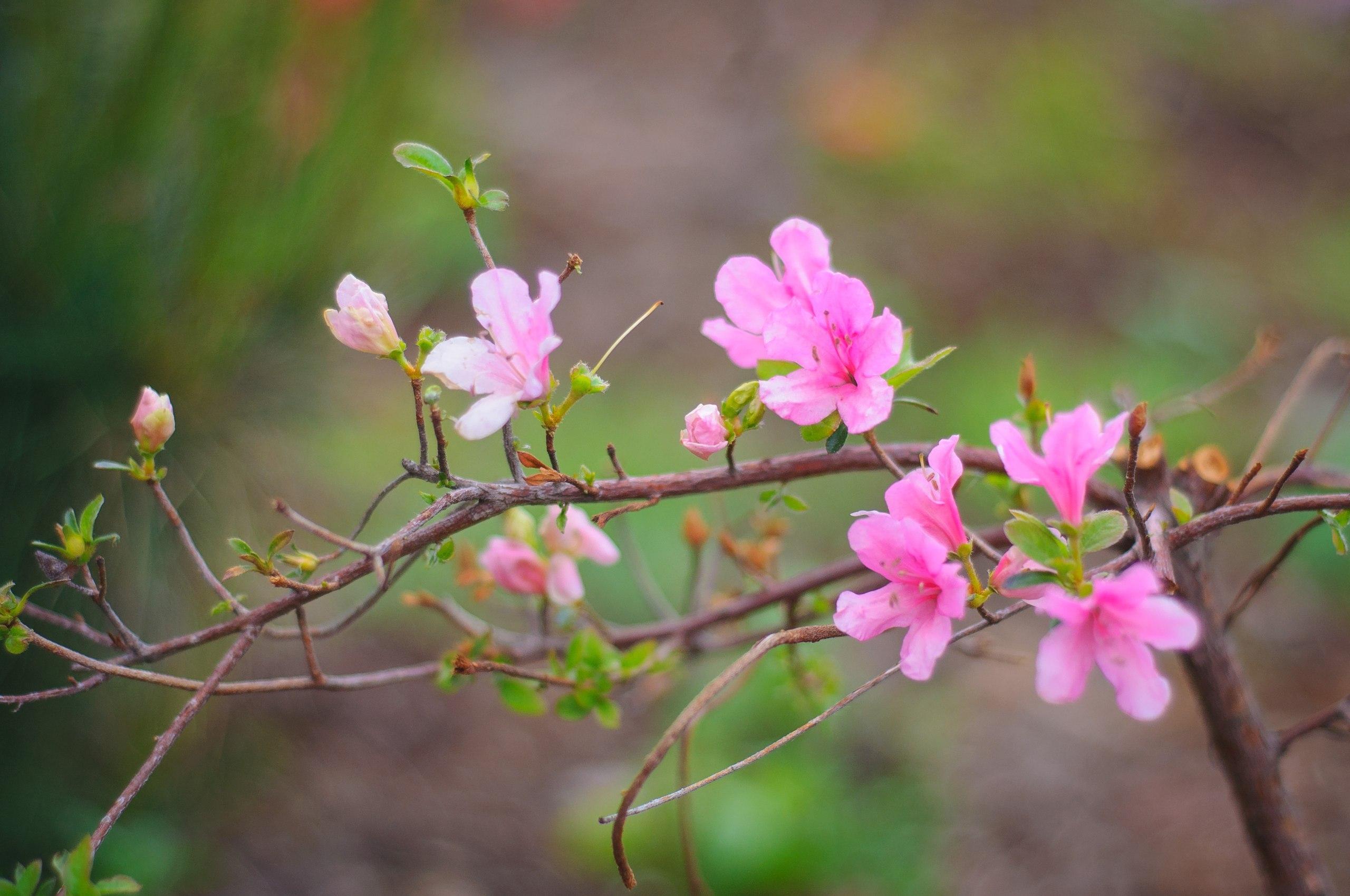 18314 скачать обои Растения, Цветы - заставки и картинки бесплатно