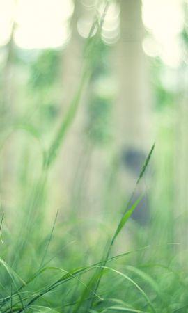 16242 descargar fondo de pantalla Plantas, Hierba, Fondo: protectores de pantalla e imágenes gratis