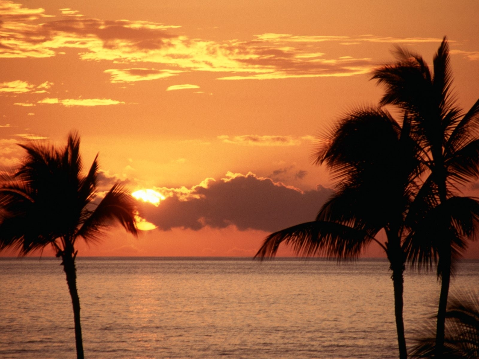 1499 download wallpaper Landscape, Sunset, Sky, Sea, Sun, Palms screensavers and pictures for free