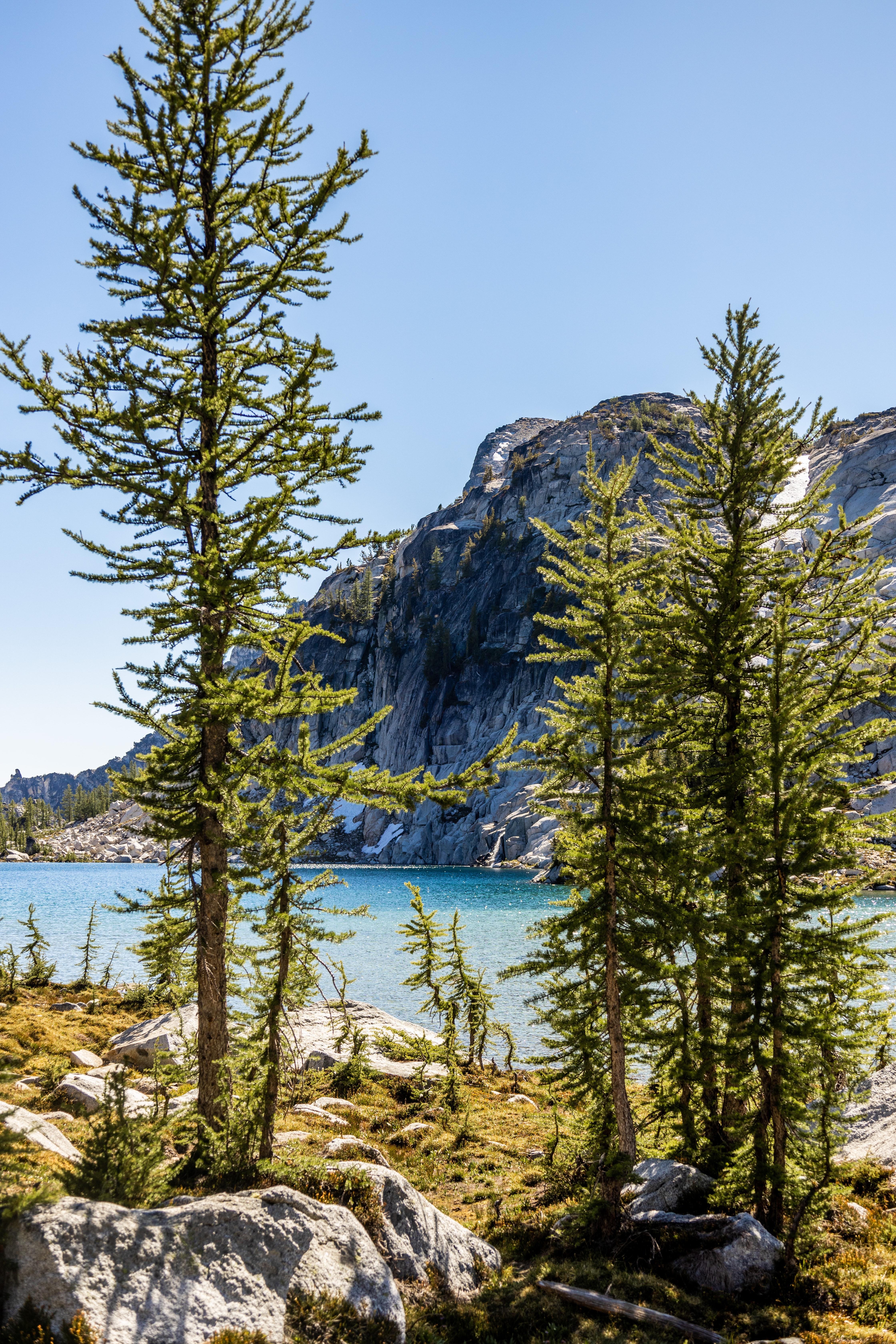 82743 скачать обои Деревья, Озеро, Гора, Природа, Сосны - заставки и картинки бесплатно