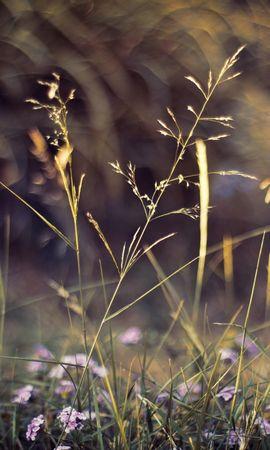 98742 descargar fondo de pantalla Macro, Hierba, Plantas, Naturaleza, Flores: protectores de pantalla e imágenes gratis