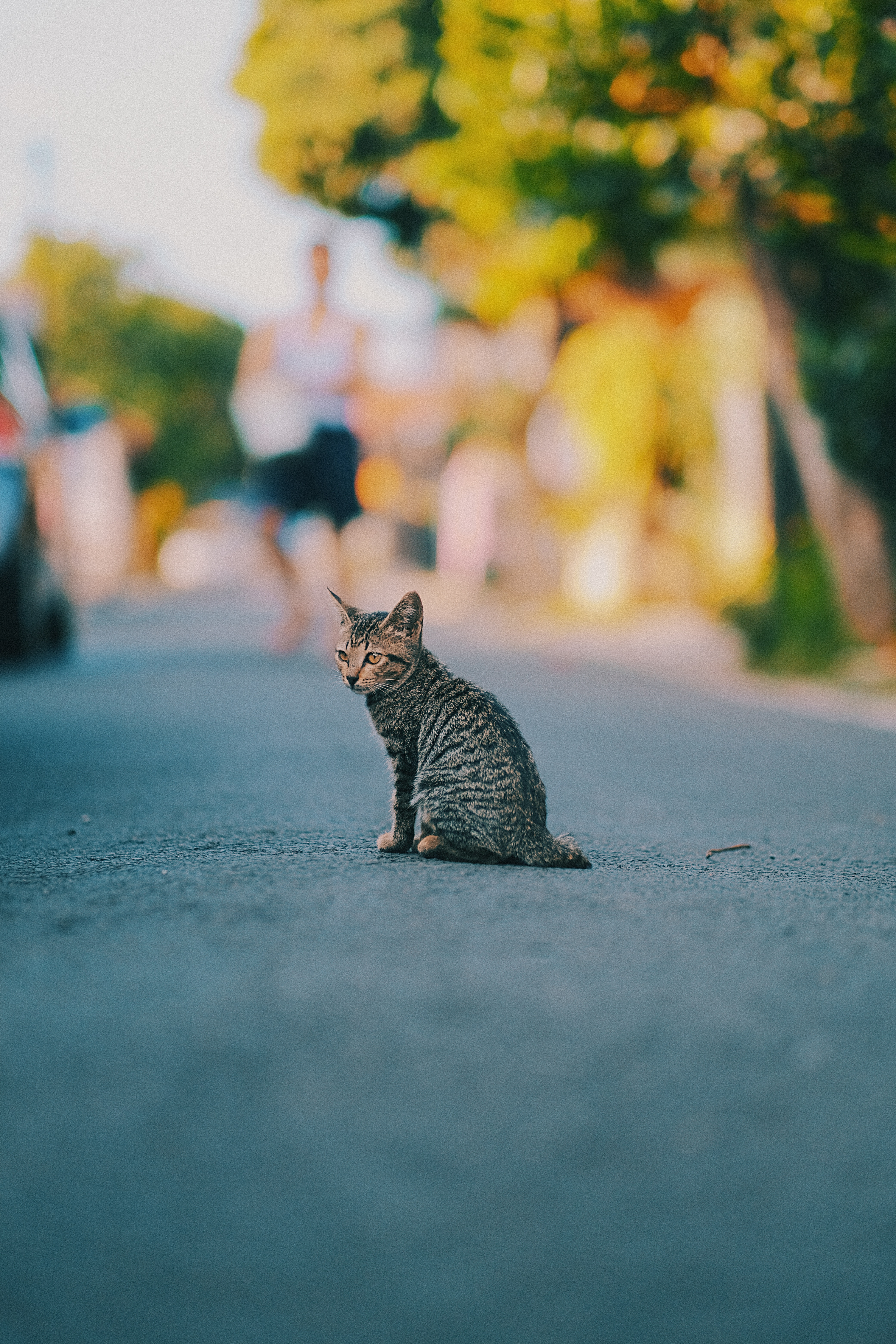 87580 Screensavers and Wallpapers Nice for phone. Download Animals, Cat, Kitty, Kitten, Striped, Pet, Nice, Sweetheart pictures for free