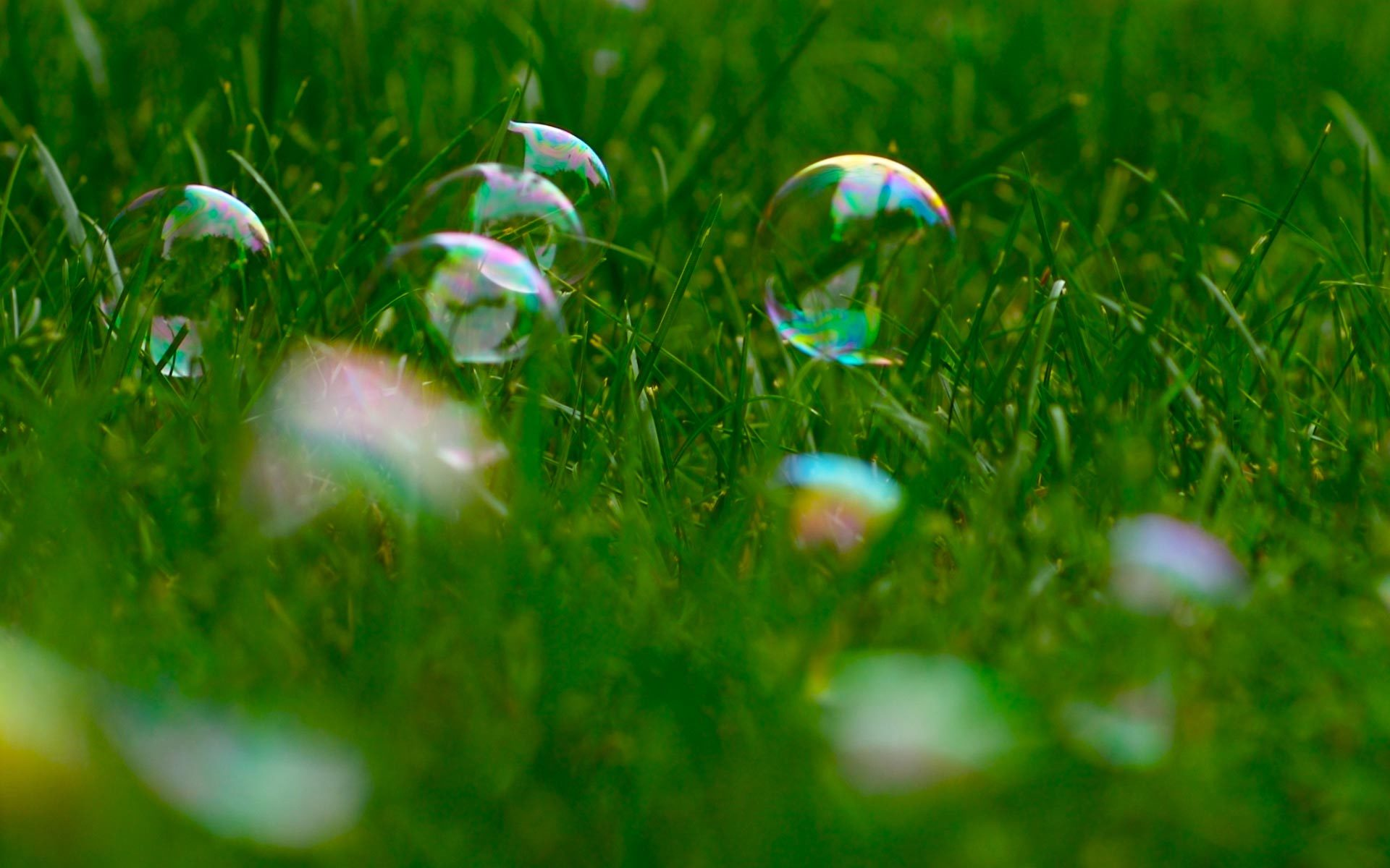 22174 download wallpaper Plants, Grass, Bubbles screensavers and pictures for free