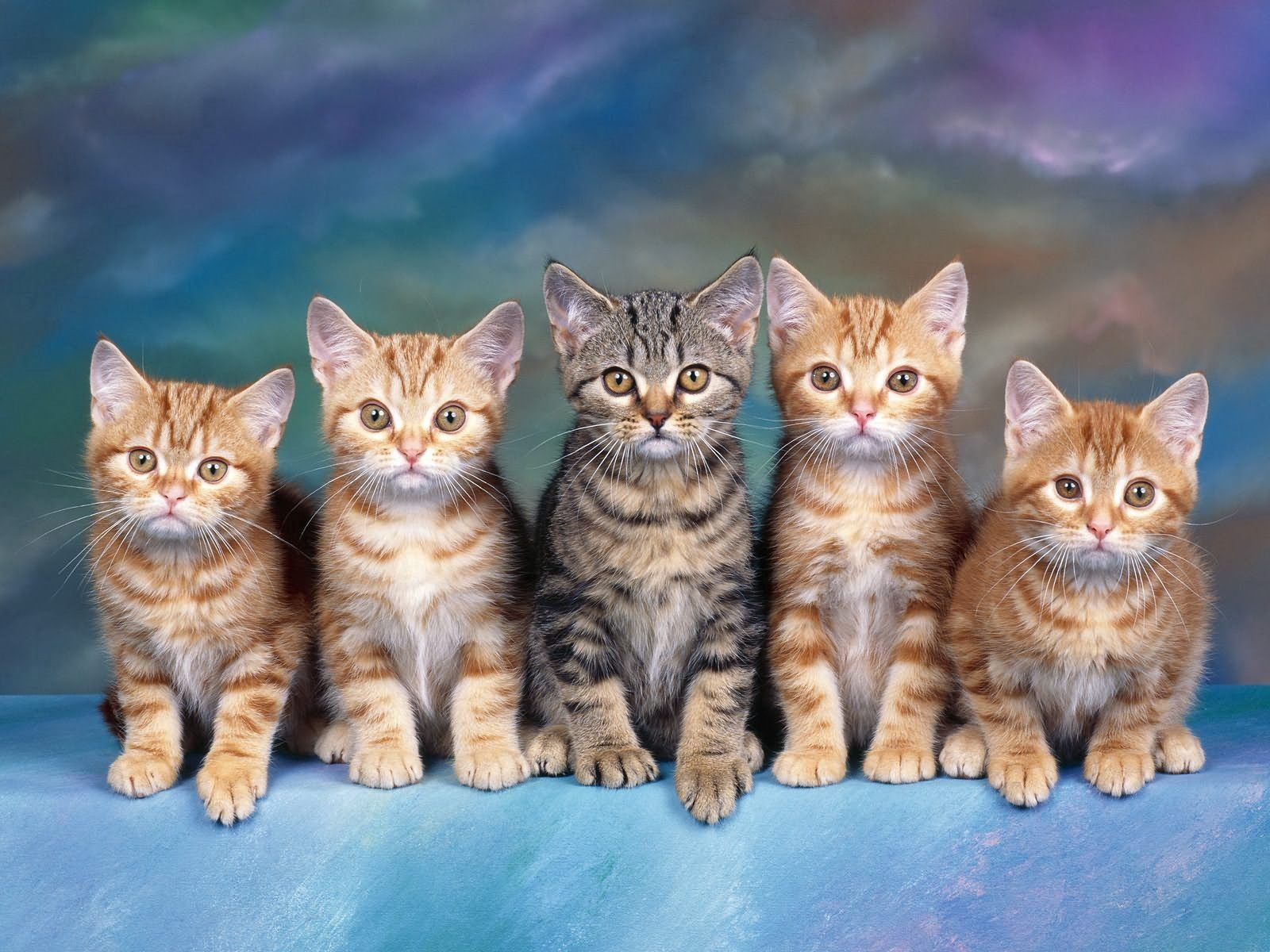 129800 download wallpaper Animals, Sit, Lot, Kittens screensavers and pictures for free
