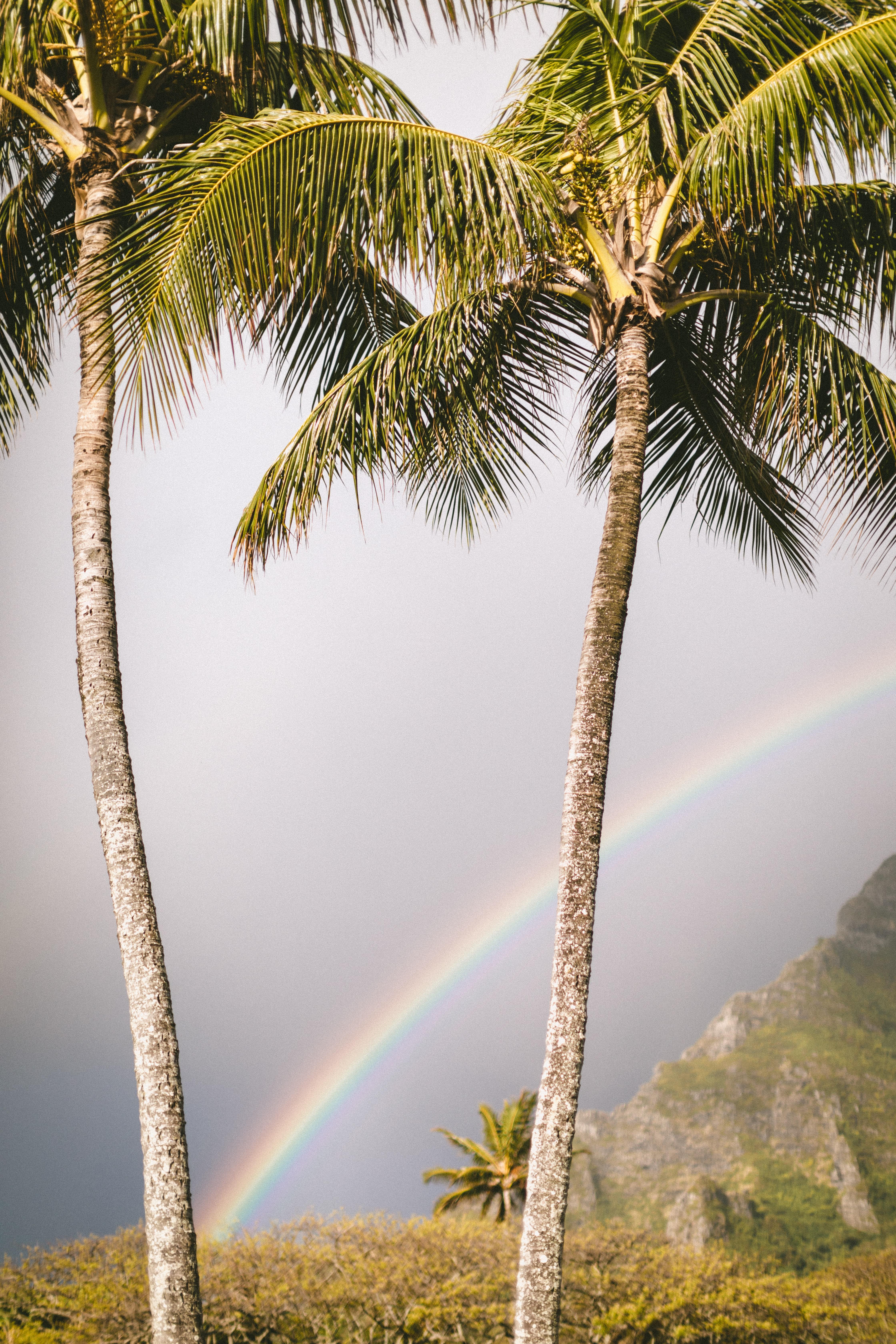 151089 免費下載壁紙 彩虹, 性质, 夏天, 棕榈 屏保和圖片