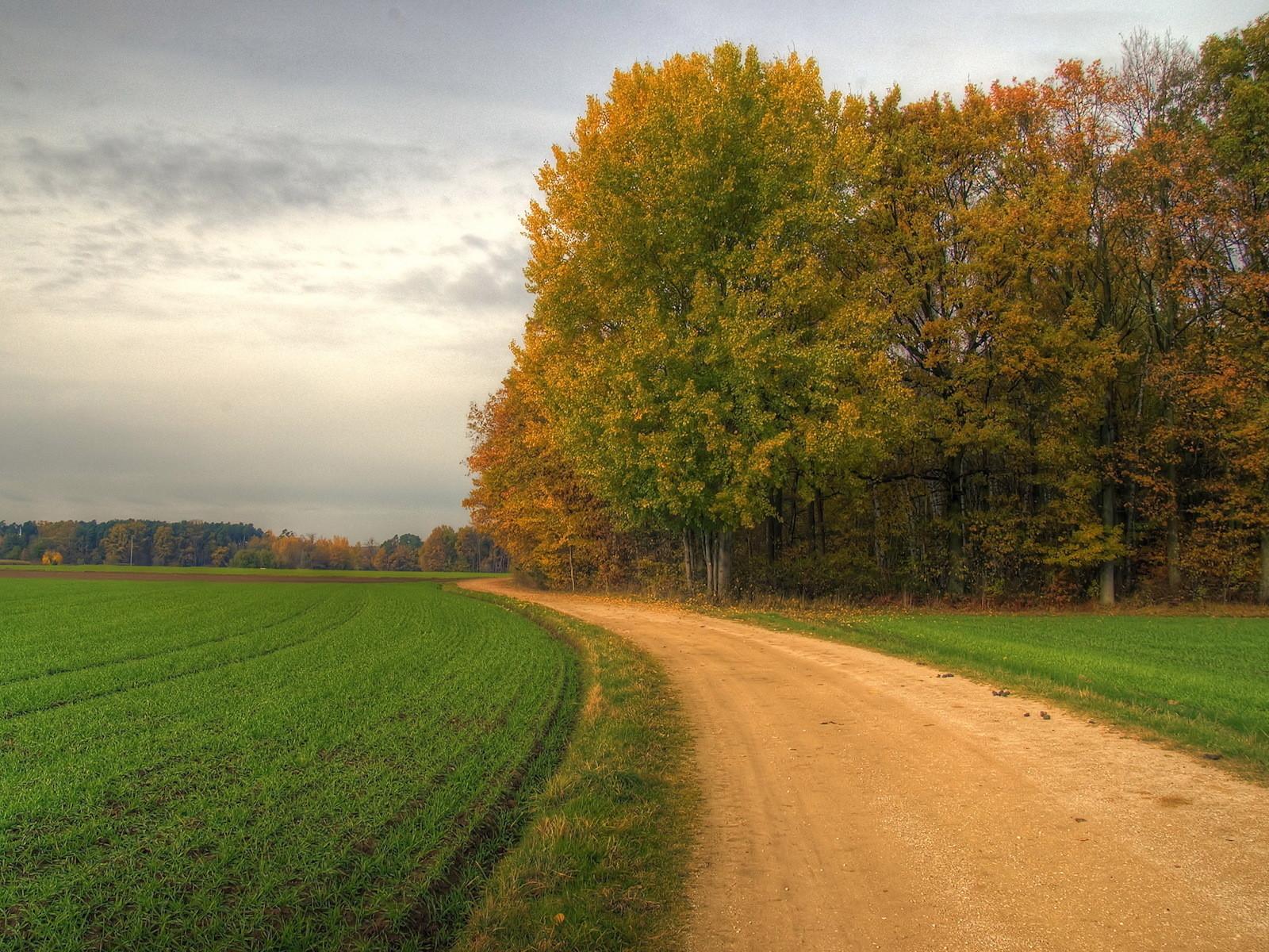 11382 скачать обои Пейзаж, Деревья, Дороги - заставки и картинки бесплатно