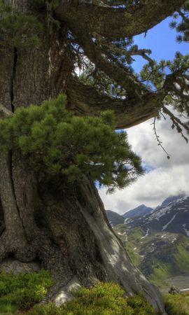 41928 descargar fondo de pantalla Paisaje, Naturaleza, Árboles: protectores de pantalla e imágenes gratis