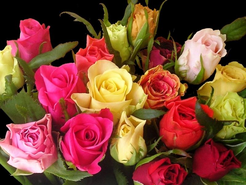 43748 скачать обои Растения, Цветы, Розы - заставки и картинки бесплатно