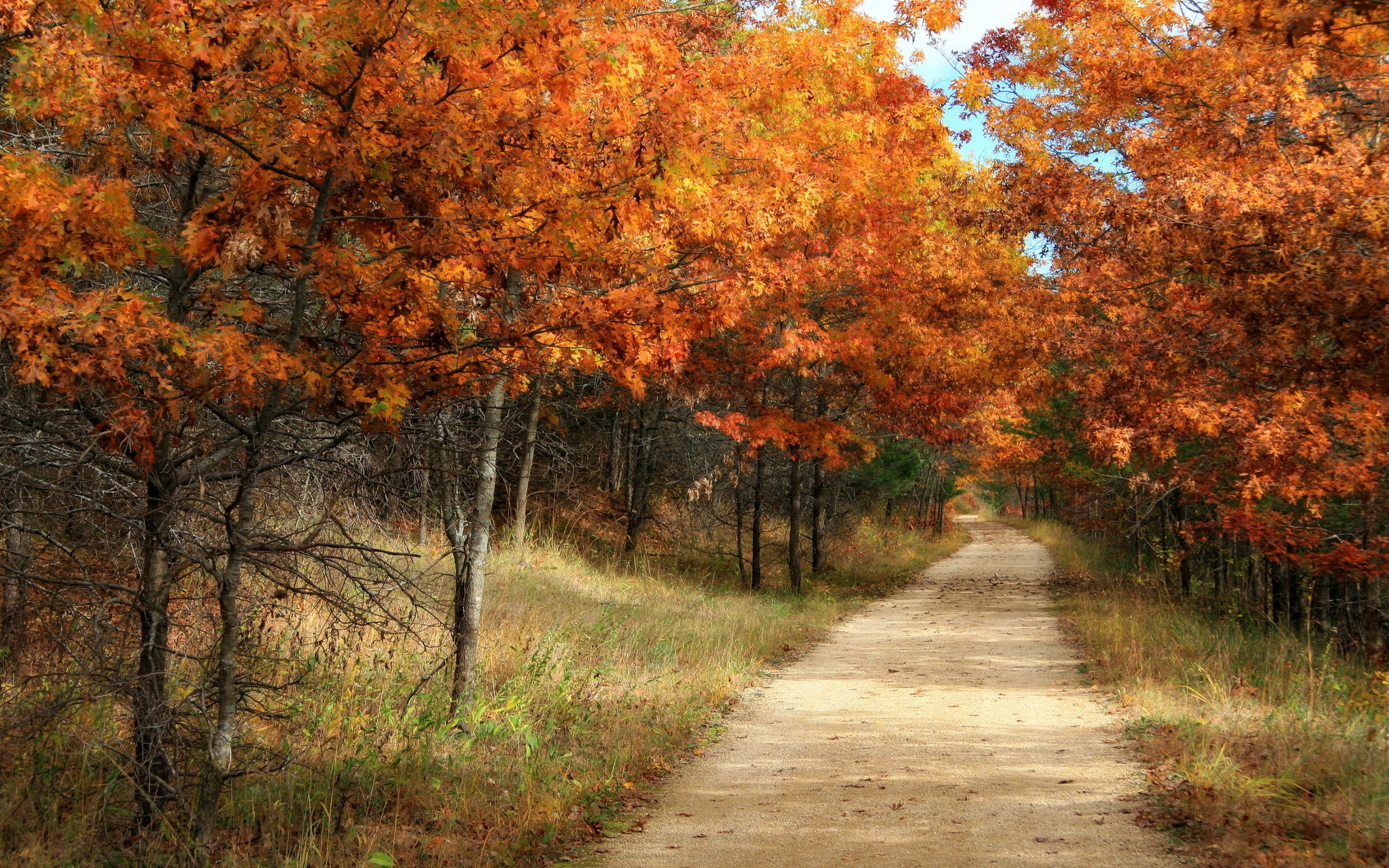 32818 download wallpaper Landscape, Trees, Roads, Autumn screensavers and pictures for free