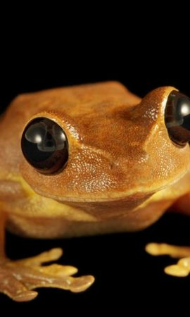 43410 baixar papel de parede Animais, Frogs - protetores de tela e imagens gratuitamente