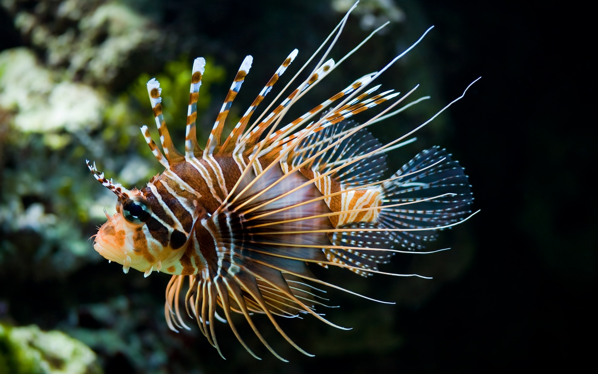 35310 download wallpaper Animals, Fishes screensavers and pictures for free