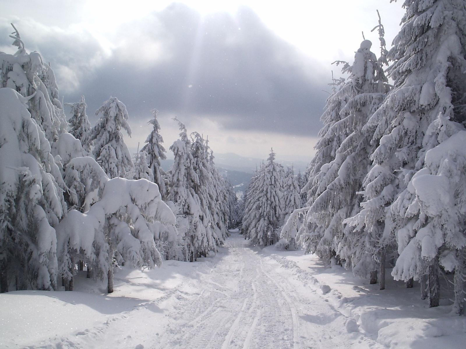 1742 скачать обои Пейзаж, Зима, Деревья, Дороги, Снег - заставки и картинки бесплатно