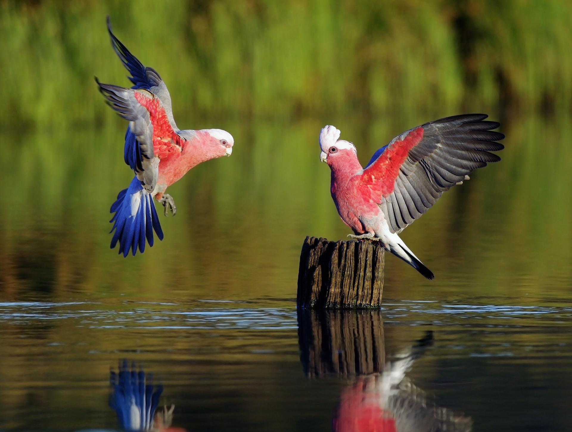 82688 Hintergrundbild 720x1280 kostenlos auf deinem Handy, lade Bilder Tiere, Vögel, Flüsse, Papageien, Feder, Holz, Farbe, Welle, Stumpf, Fegen 720x1280 auf dein Handy herunter