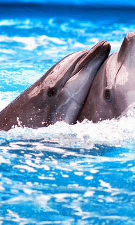 35436 download wallpaper Animals, Dolfins screensavers and pictures for free