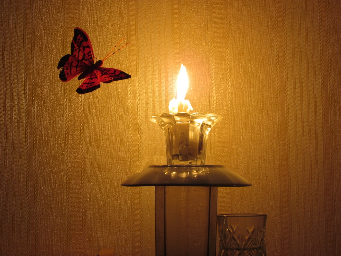 44102 download wallpaper Butterflies, Insects, Objects screensavers and pictures for free