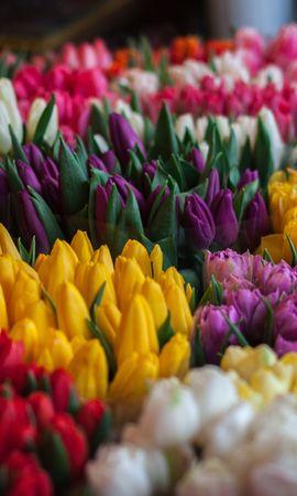 80895 télécharger le fond d'écran Fleurs, Multicolore, Hétéroclite, Tulipes, Bouquets - économiseurs d'écran et images gratuitement