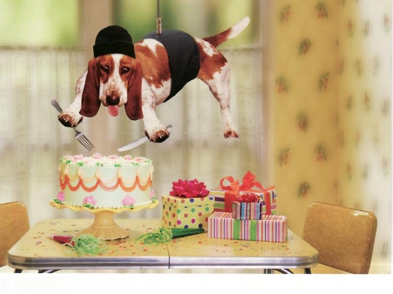 37547 Bildschirmschoner und Hintergrundbilder Humor auf Ihrem Telefon. Laden Sie Humor, Tiere, Hunde Bilder kostenlos herunter