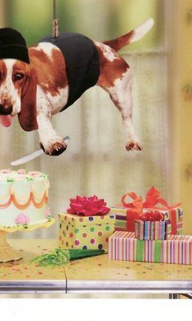 37547 скачать обои Юмор, Животные, Собаки - заставки и картинки бесплатно