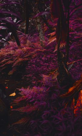 144850 download wallpaper Nature, Fern, Plants, Jungle, Tropical, Thick, Purple, Violet screensavers and pictures for free