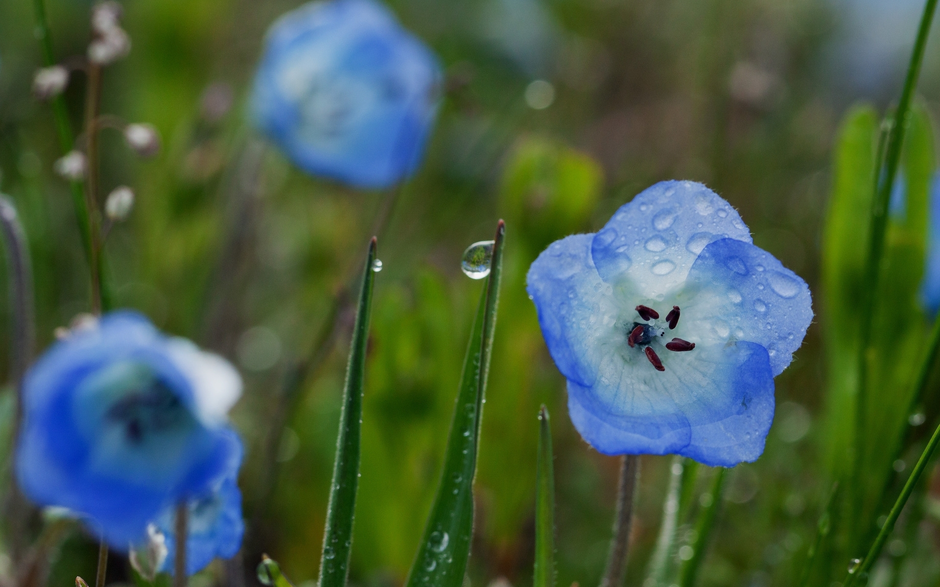 26842 download wallpaper Plants, Flowers, Drops screensavers and pictures for free