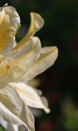 41530 descargar fondo de pantalla Plantas, Flores: protectores de pantalla e imágenes gratis