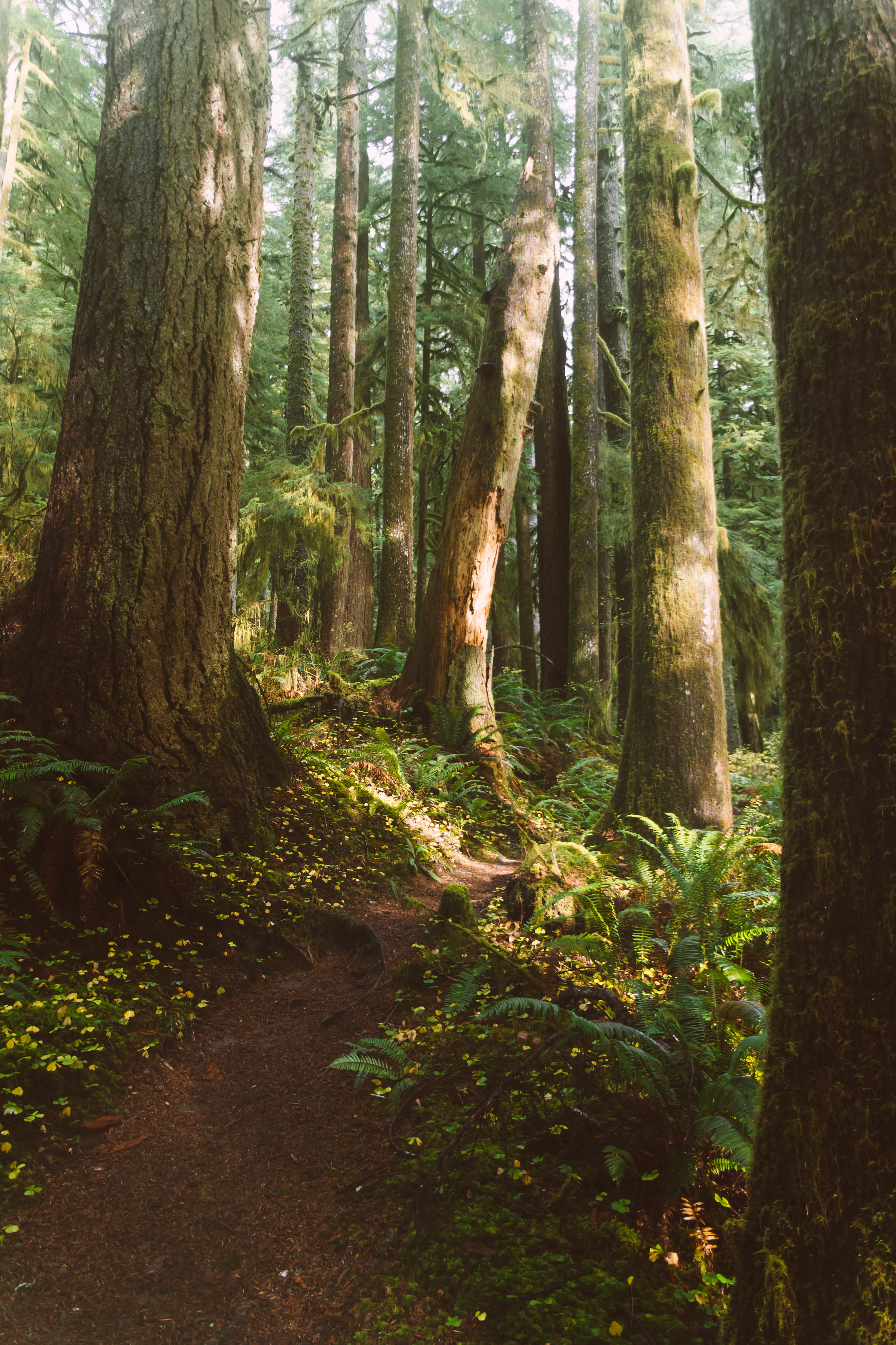 144937 download wallpaper Nature, Trees, Fern, Forest, Vegetation, Path screensavers and pictures for free