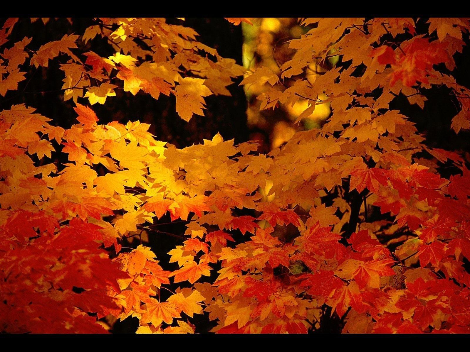 5612 скачать обои Растения, Пейзаж, Осень, Листья - заставки и картинки бесплатно