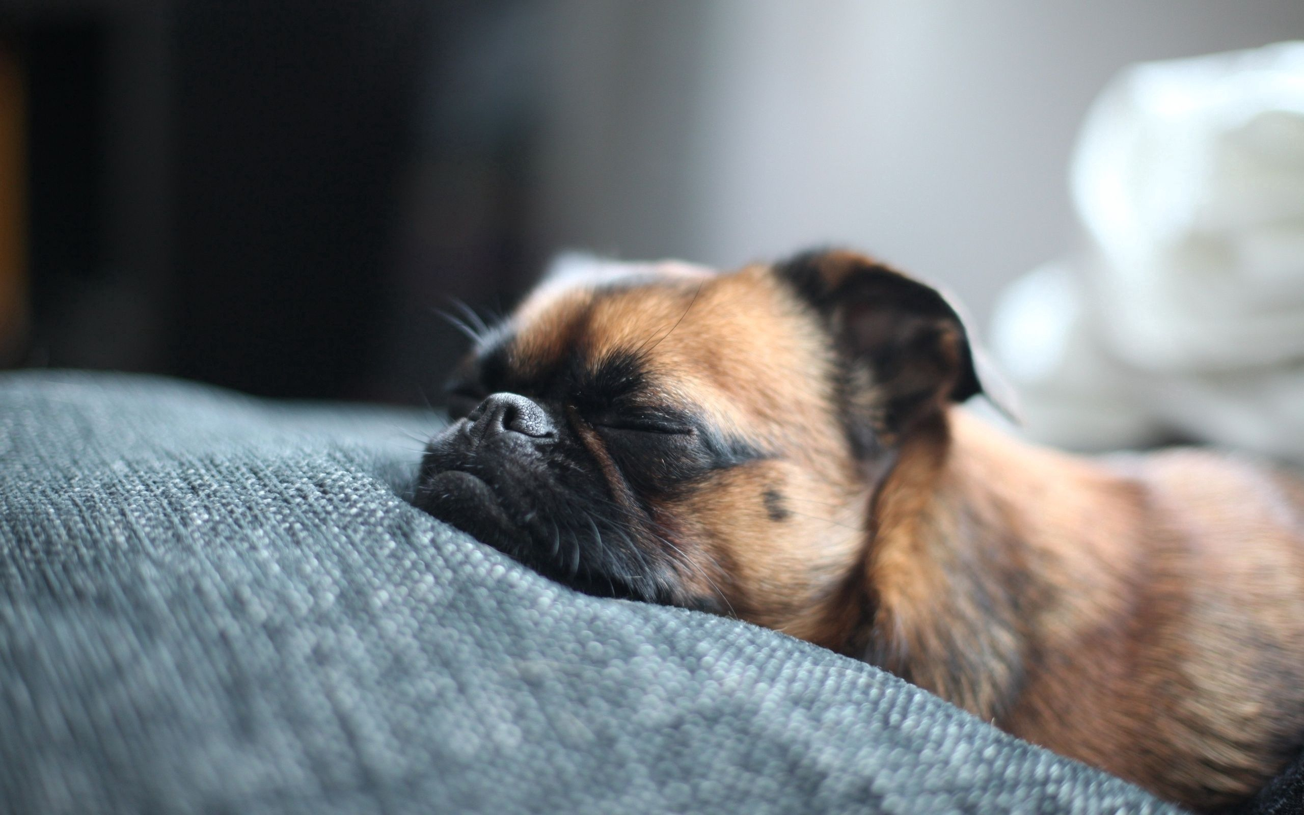 127056 download wallpaper Animals, Dog, Muzzle, Spotted, Spotty, Sleep, Dream screensavers and pictures for free