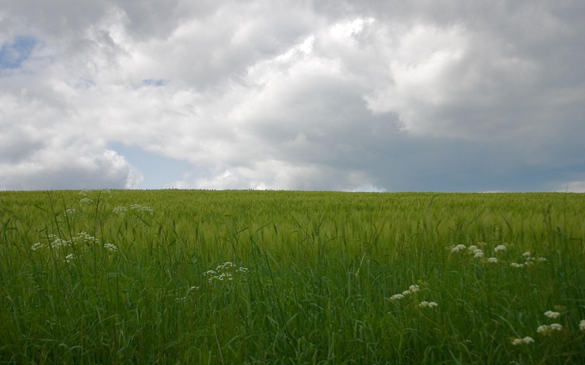 946 скачать обои Пейзаж, Трава, Небо - заставки и картинки бесплатно