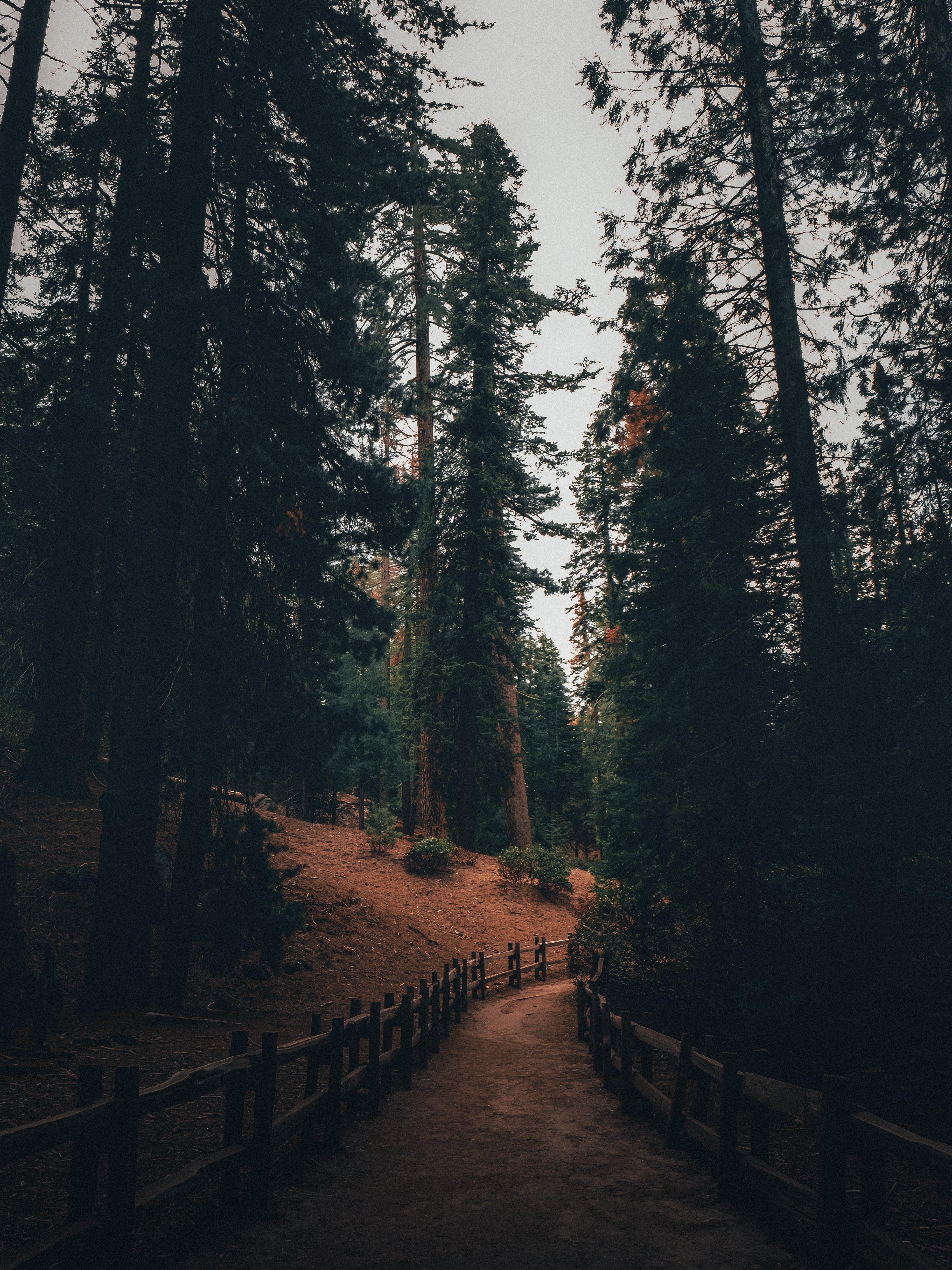 72173 скачать обои Дорожка, Деревья, Лес, Природа, Сосны - заставки и картинки бесплатно