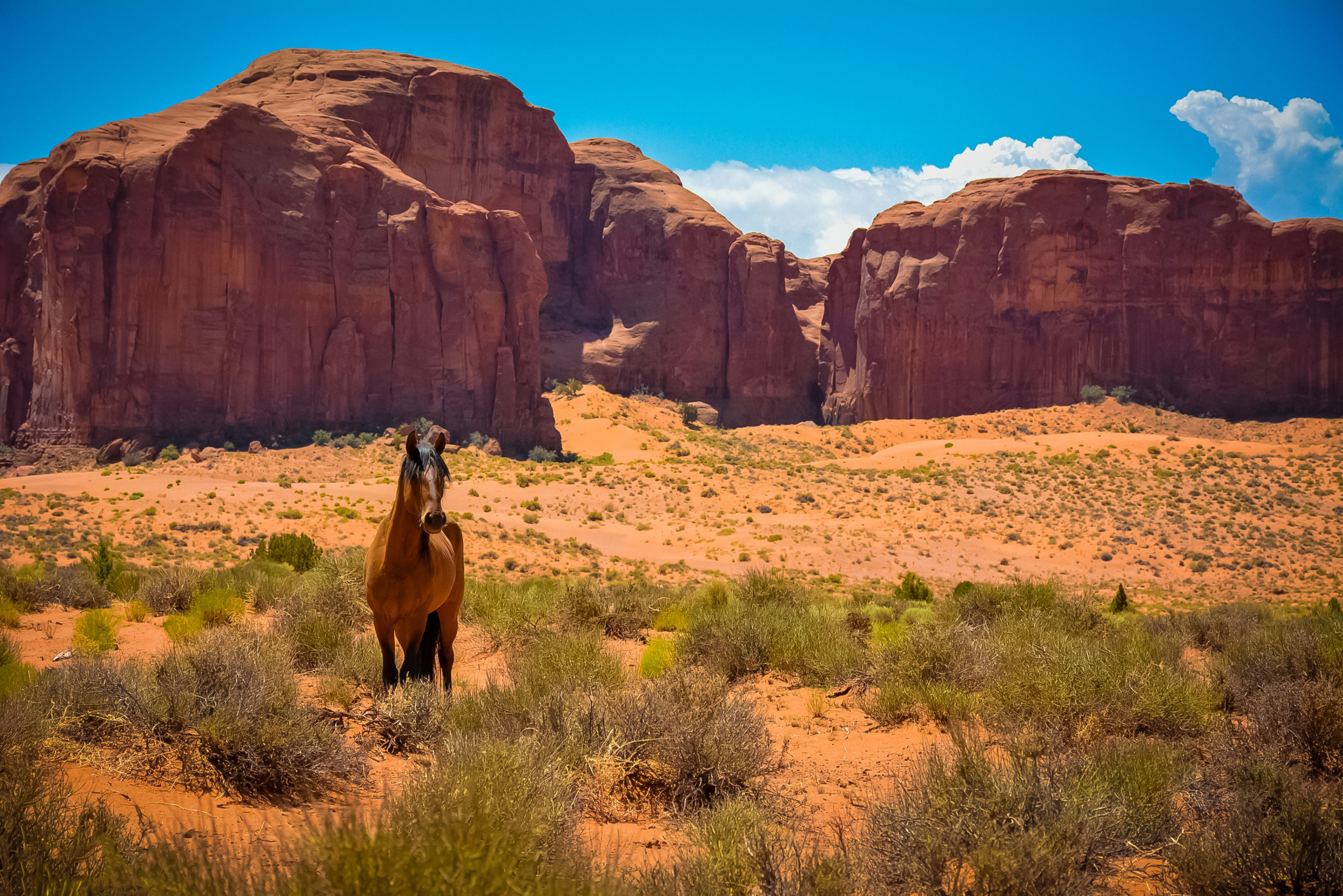 Free wallpaper 144957: Animals, Horse, Usa, United States, Arizona, Valley Of Monuments, Monument Valley, Wild West, Desert download pictures for cellphone