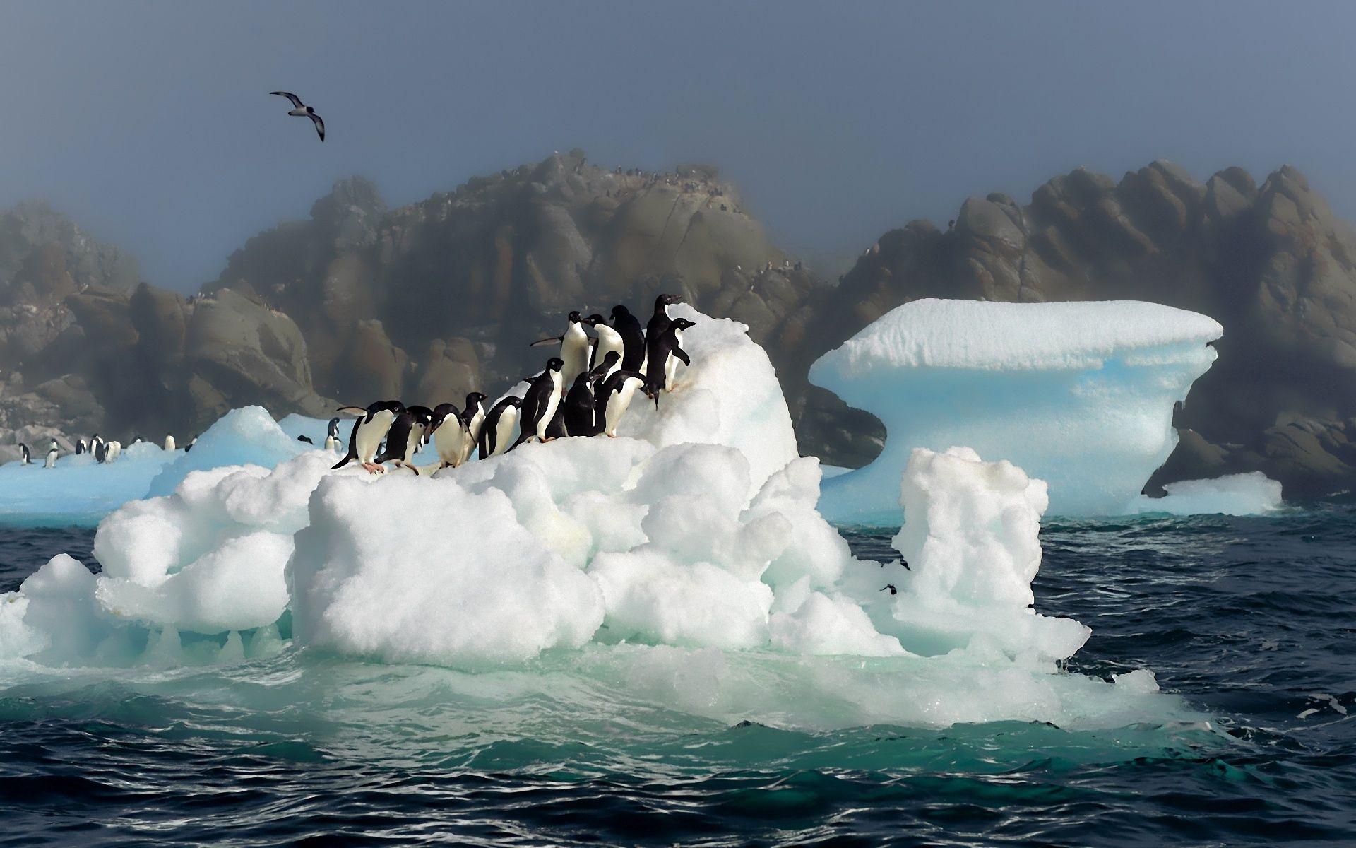 93096 Hintergrundbild herunterladen Vögel, Tiere, Wasser, Pinguins, Schnee, Prallen, Springen, Antarktis - Bildschirmschoner und Bilder kostenlos
