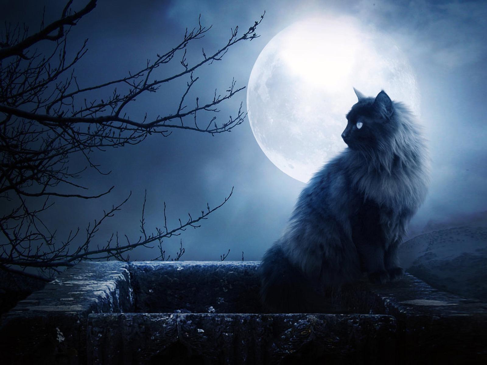 免费下载月球, 猫, 动物手机壁纸。
