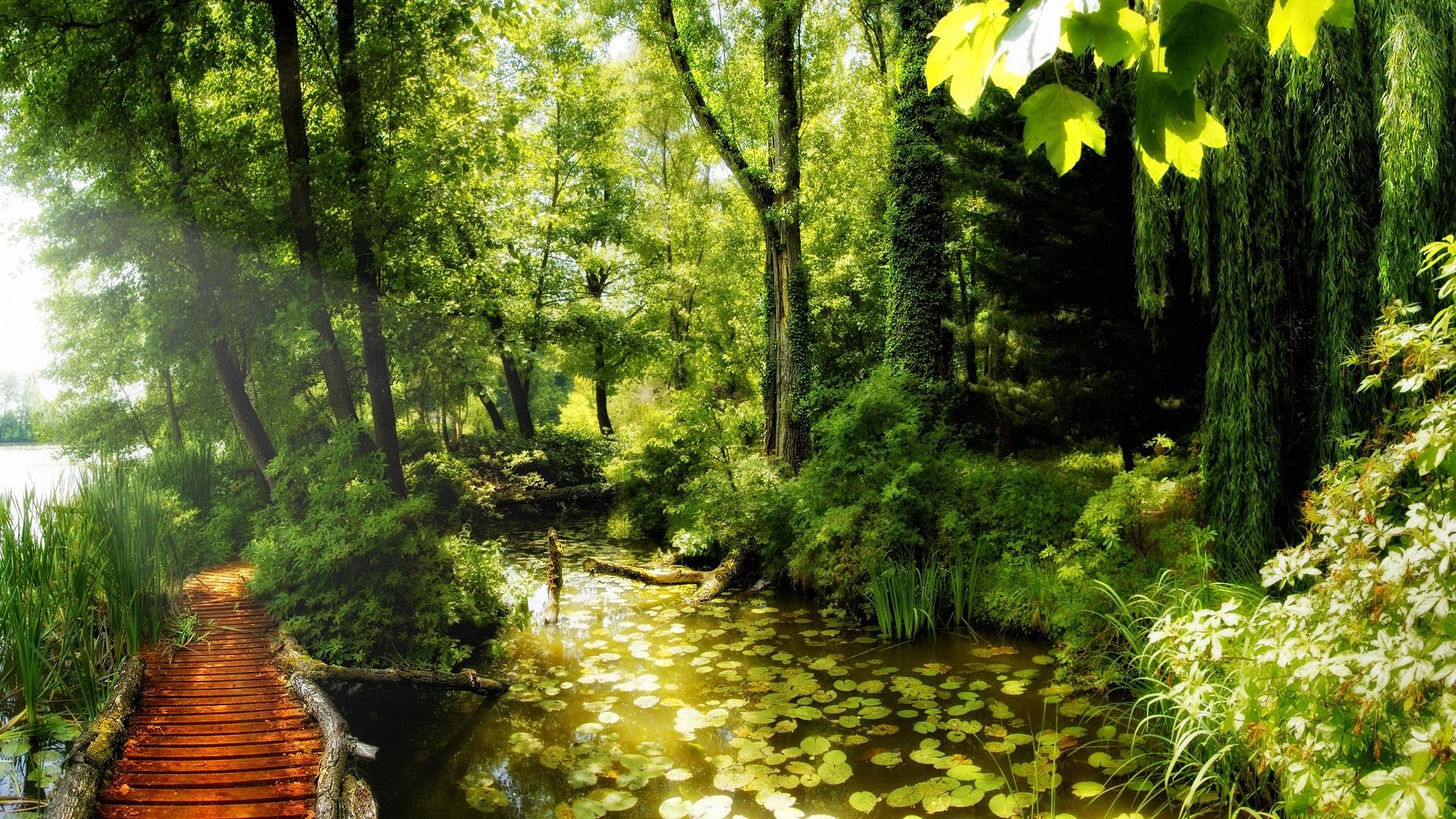 23535 скачать обои Пейзаж, Река, Деревья - заставки и картинки бесплатно
