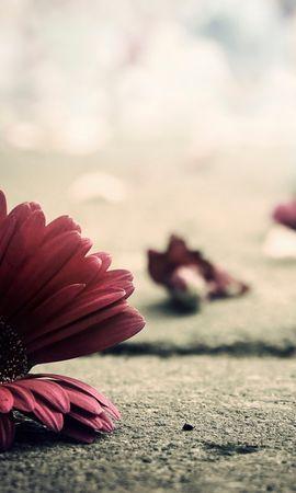 24722 скачать обои Растения, Цветы - заставки и картинки бесплатно