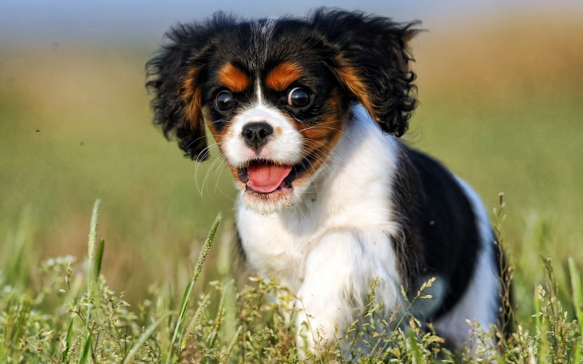 116212 Screensavers and Wallpapers Puppy for phone. Download Animals, Dog, Sight, Opinion, Puppy pictures for free