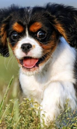 116212 download wallpaper Animals, Sight, Opinion, Dog, Puppy screensavers and pictures for free