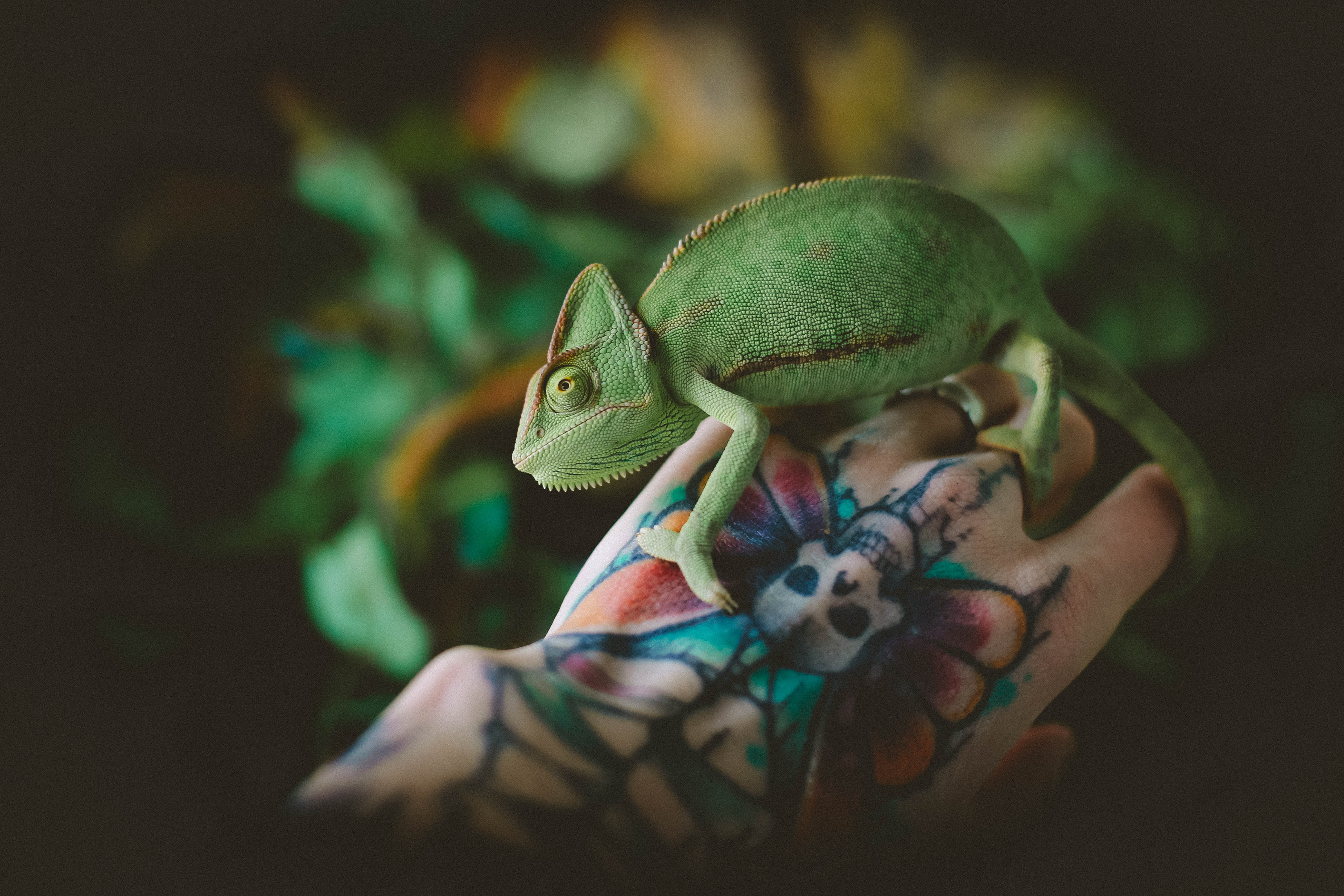 127239 download wallpaper Animals, Hand, Tattoo, Lizard, Reptile, Chameleon screensavers and pictures for free