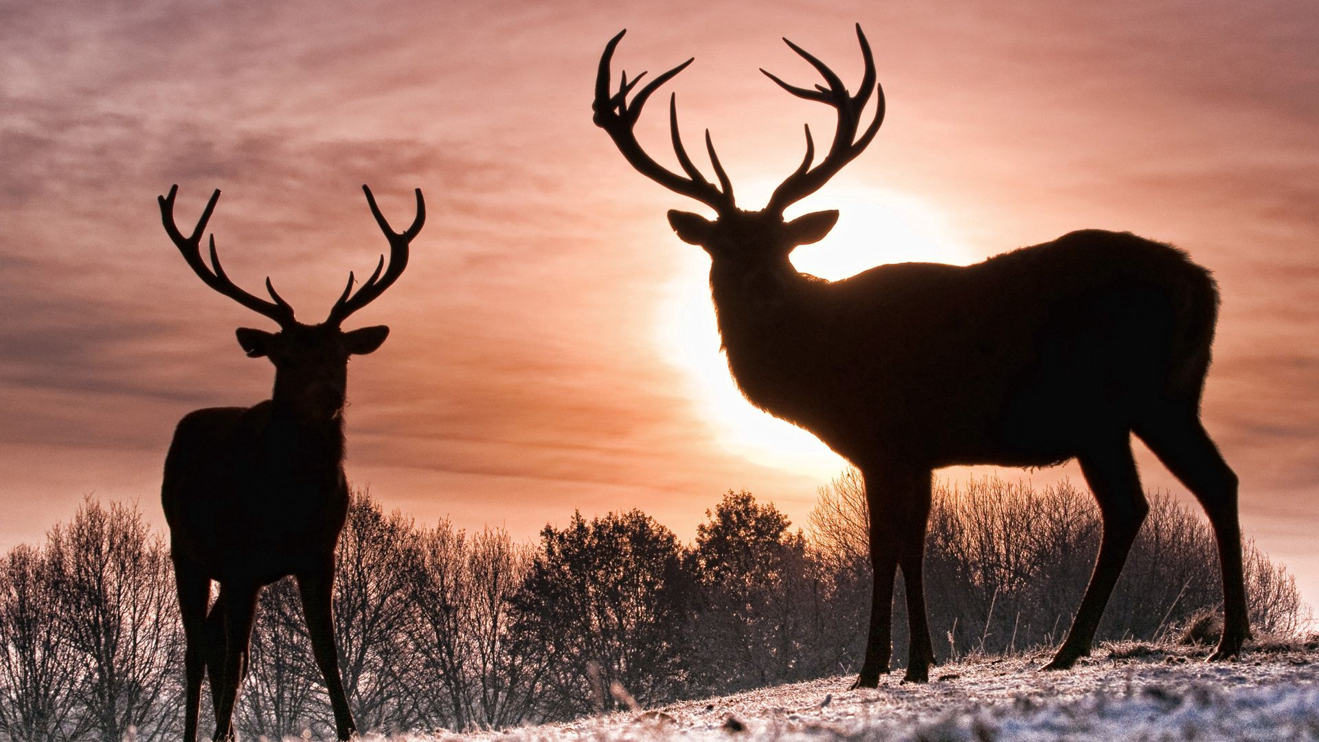 65140 download wallpaper Animals, Deers, Silhouette, Shadow, Nature, Stroll screensavers and pictures for free