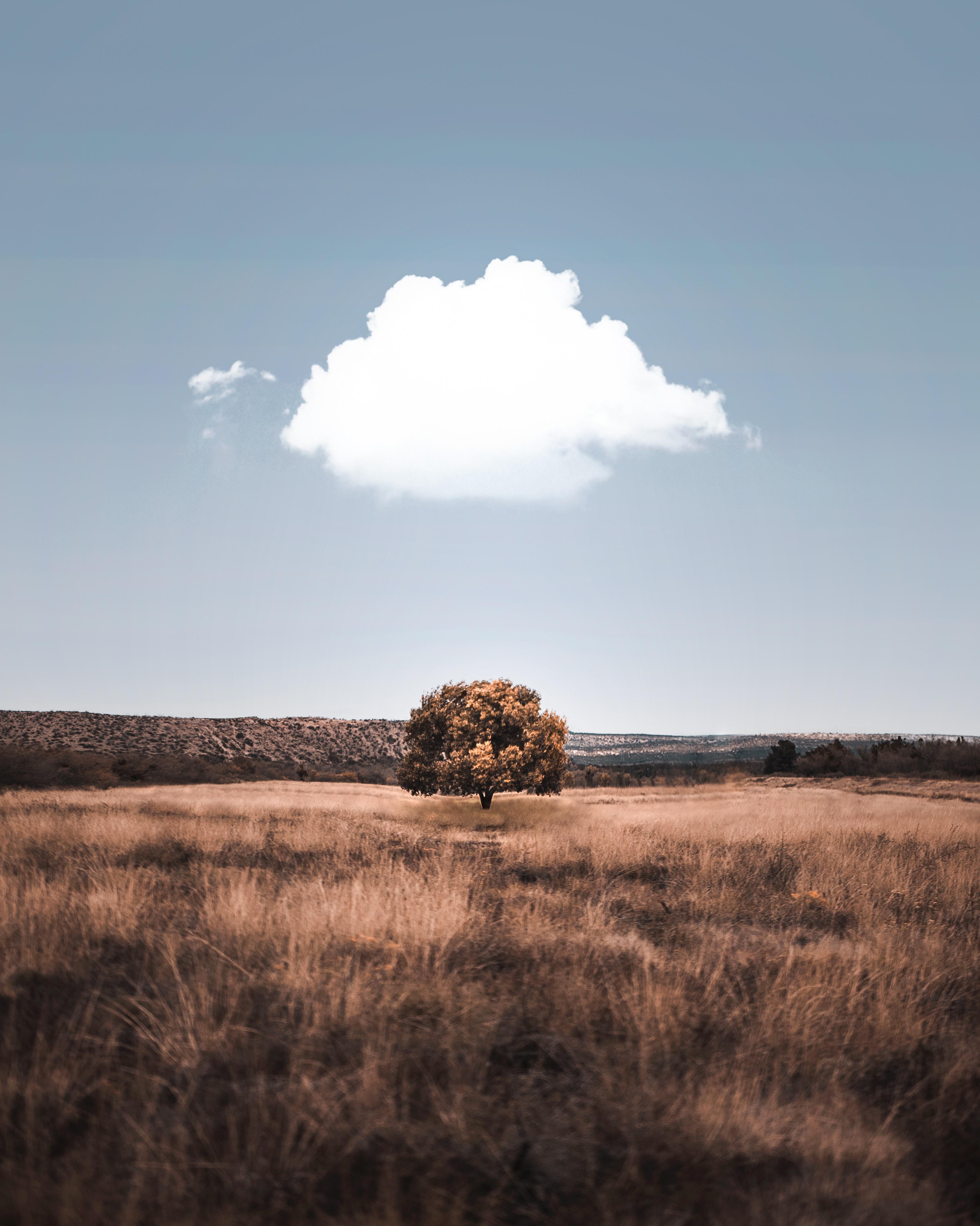 免費壁紙148490:性质, 木头, 云, 云端, 场地, 字段, 草 下載手機圖片