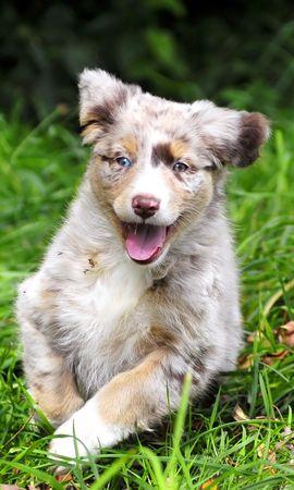 45792 baixar papel de parede Animais, Cães - protetores de tela e imagens gratuitamente