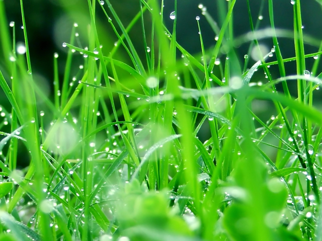 40749 download wallpaper Grass, Pictures screensavers and pictures for free