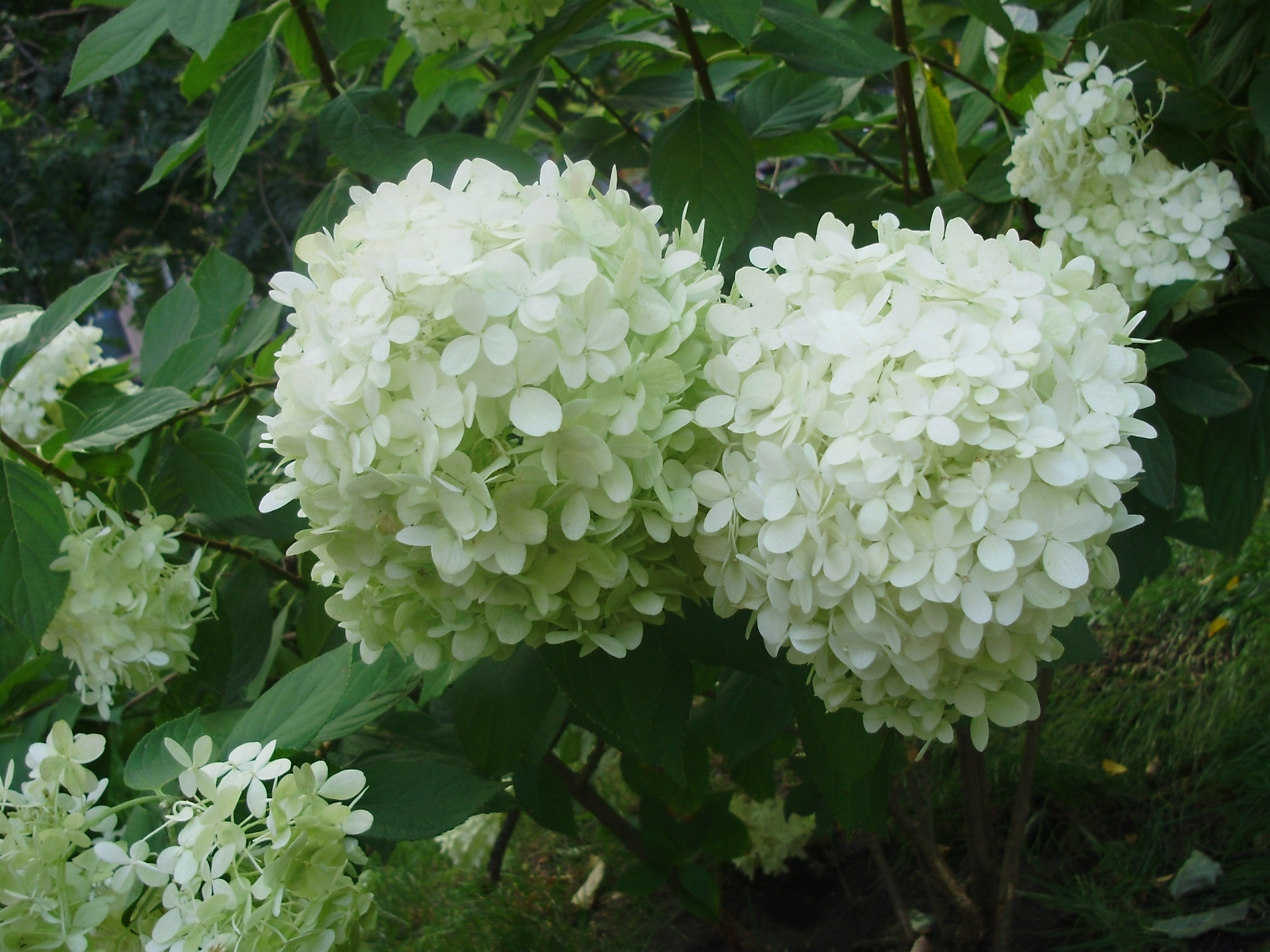 Скачать картинку Растения, Цветы в телефон бесплатно.