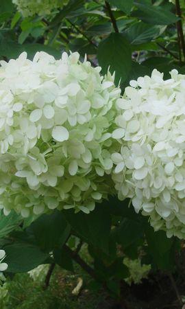 4626 скачать обои Растения, Цветы - заставки и картинки бесплатно
