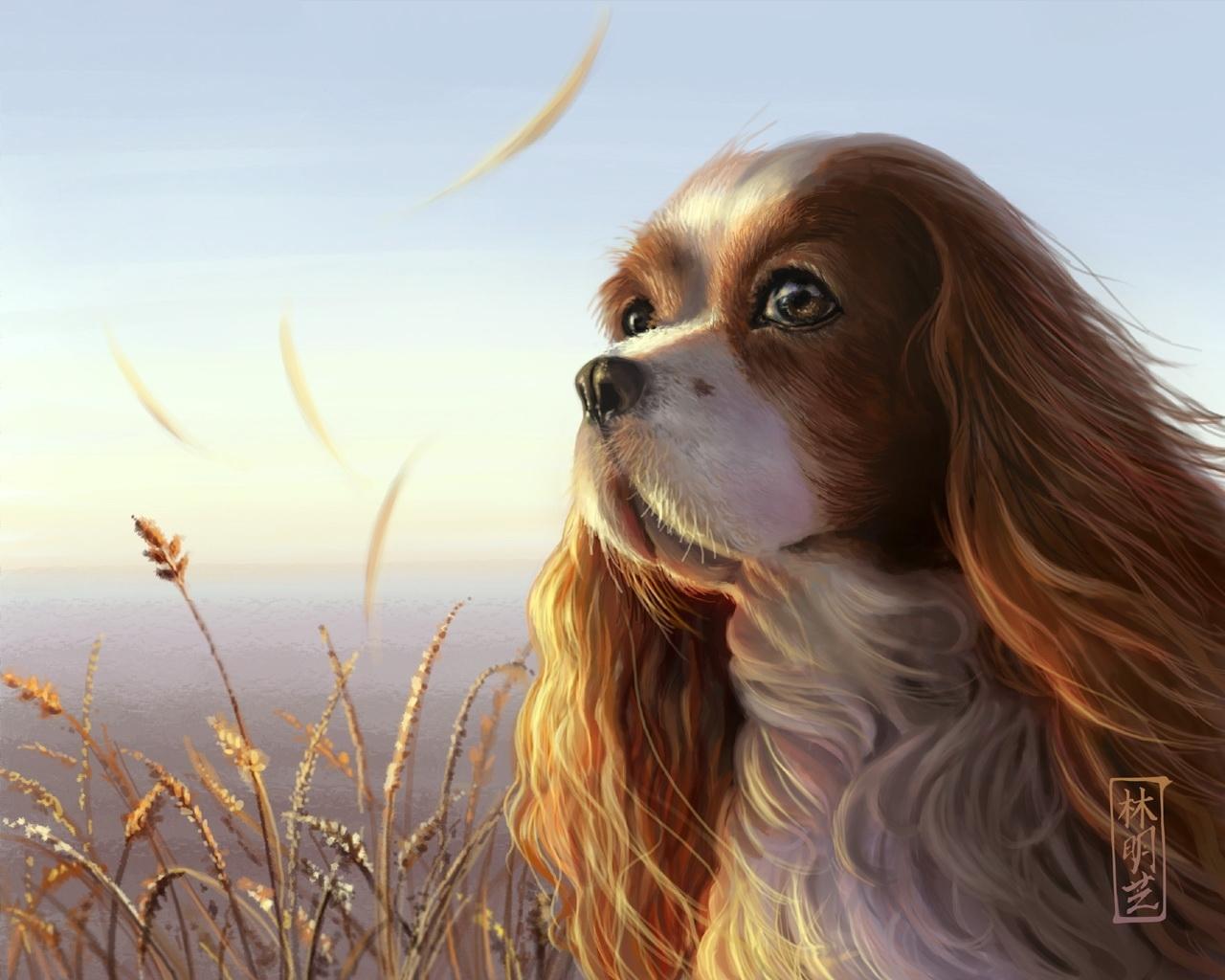9948 descargar fondo de pantalla Animales, Perros, Imágenes: protectores de pantalla e imágenes gratis