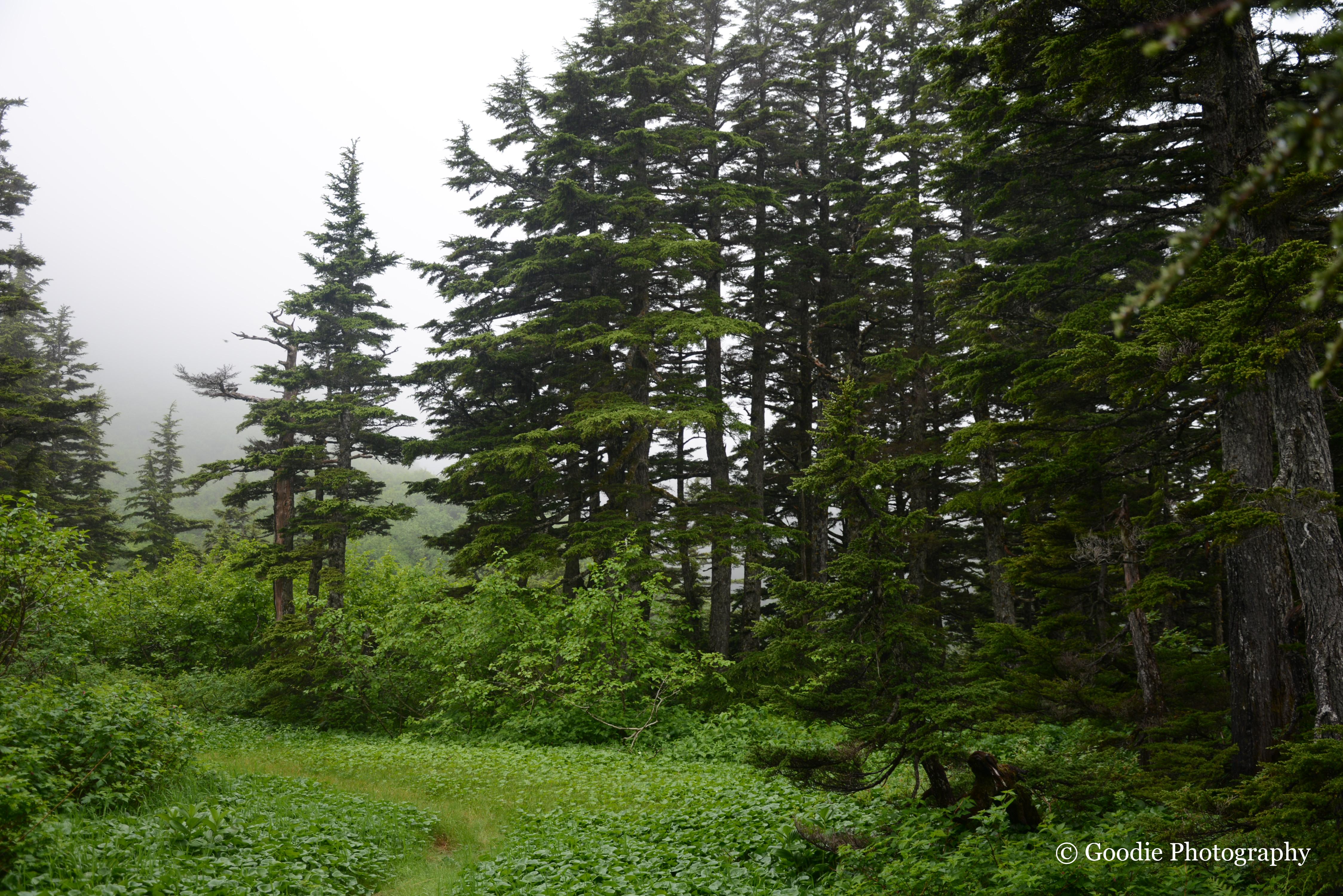 122677 скачать обои Лес, Деревья, Природа, Кусты, Сосны - заставки и картинки бесплатно