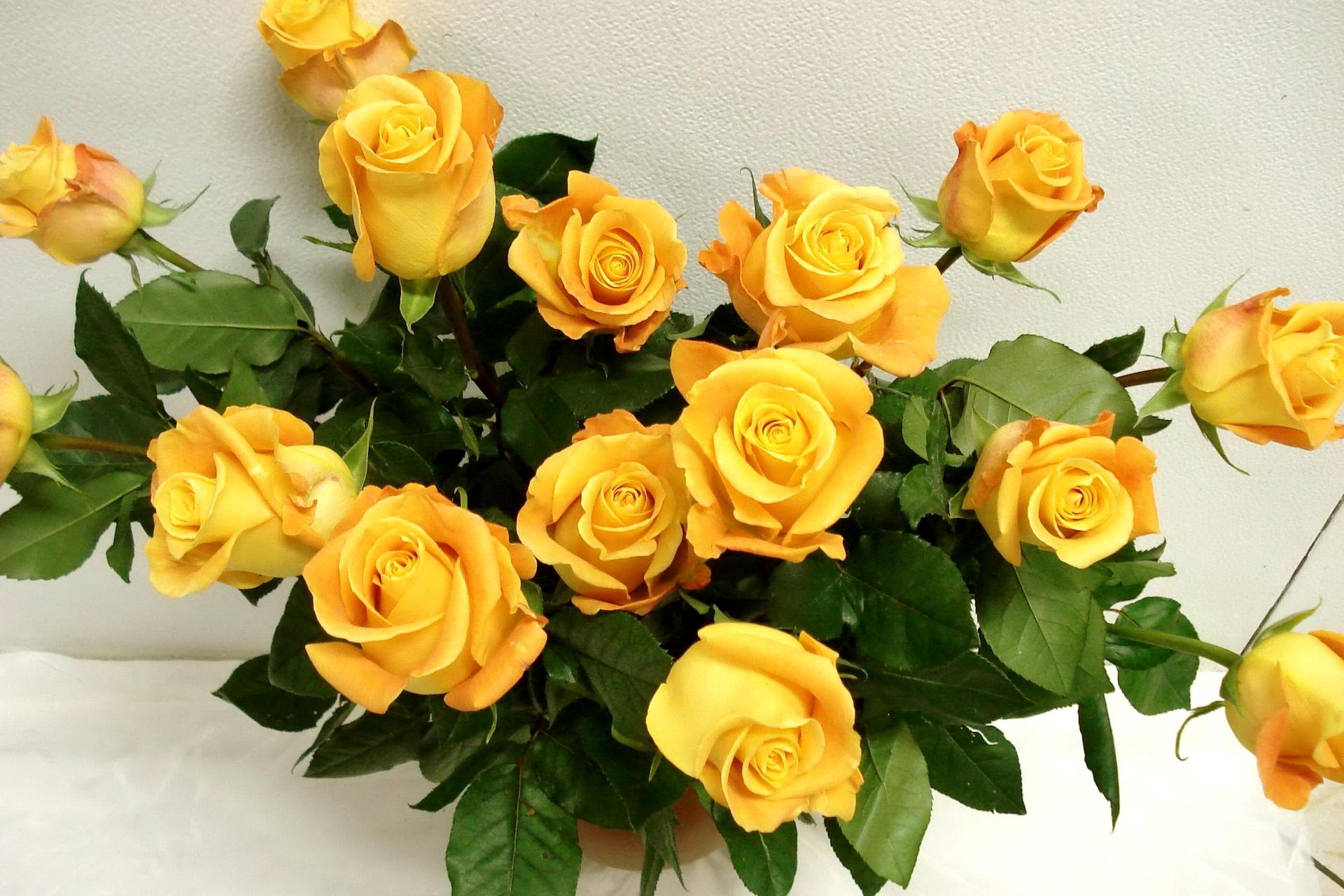 54315 скачать обои Розы, Цветы, Букет, Ваза, Шикарно - заставки и картинки бесплатно