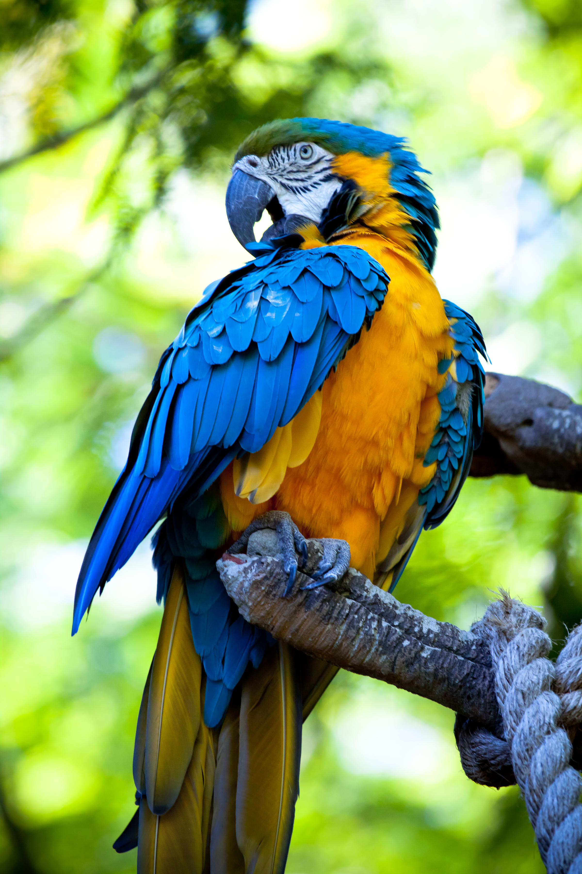 107459 download wallpaper Animals, Macaw, Parrots, Bird, Bright, Multicolored, Motley screensavers and pictures for free