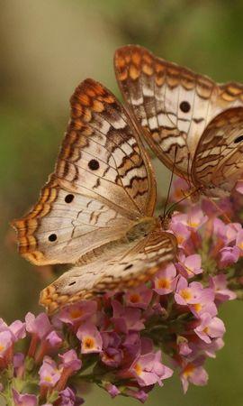 137134 descargar fondo de pantalla Macro, Mariposas, Pareja, Par, Alas, Flores, Patrones: protectores de pantalla e imágenes gratis